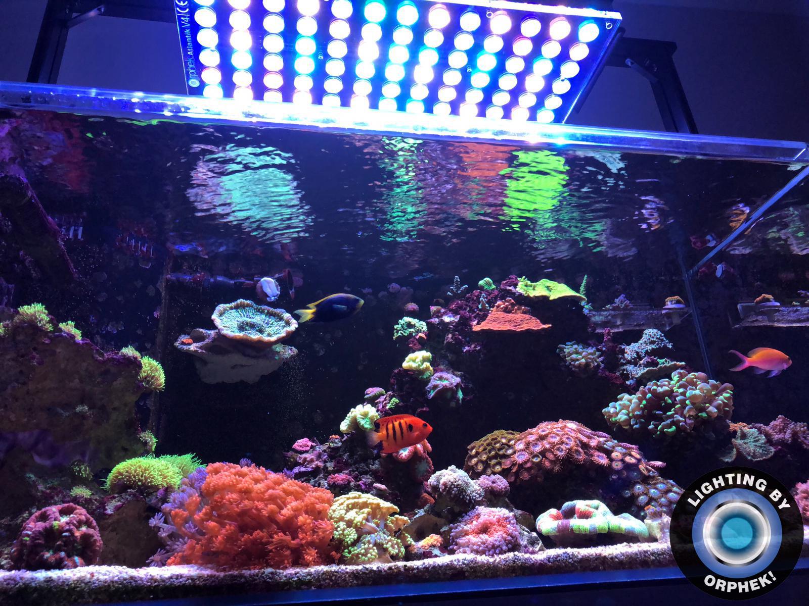 luz mais forte do tanque de recife orphek