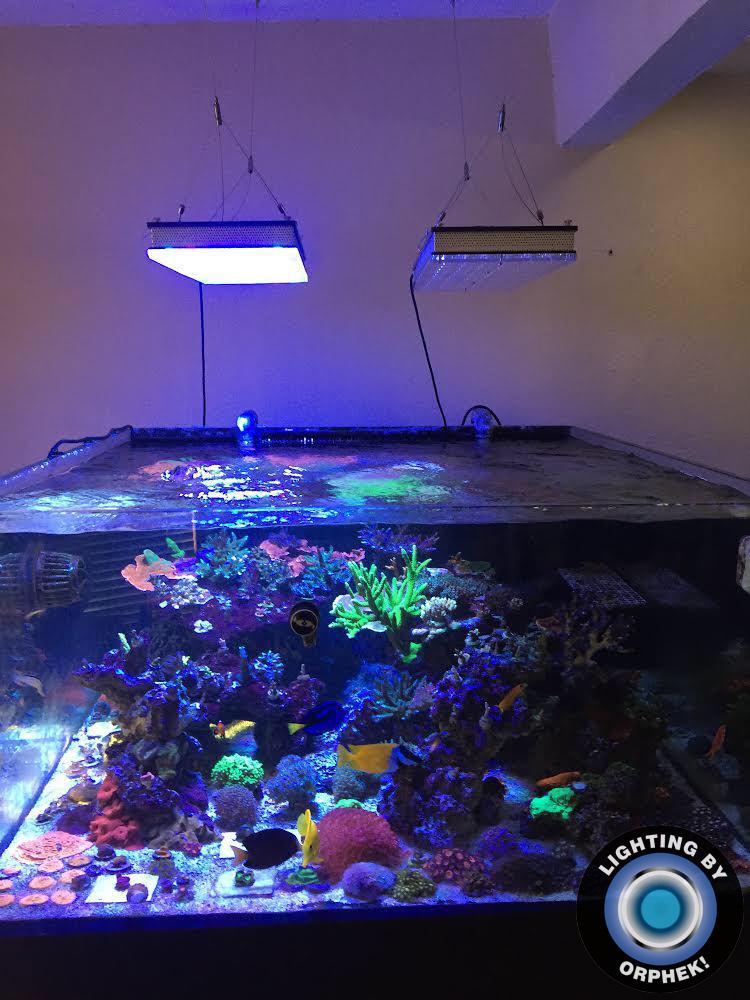 אורות אקווריום השונית החזקה ביותר orphek atlantik v4
