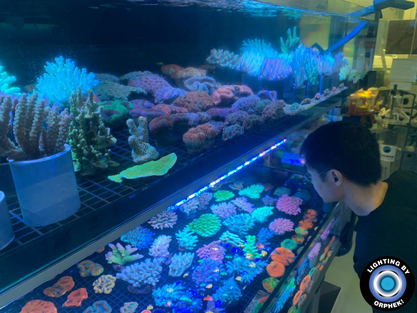public reef aquarium LED lighting 2020