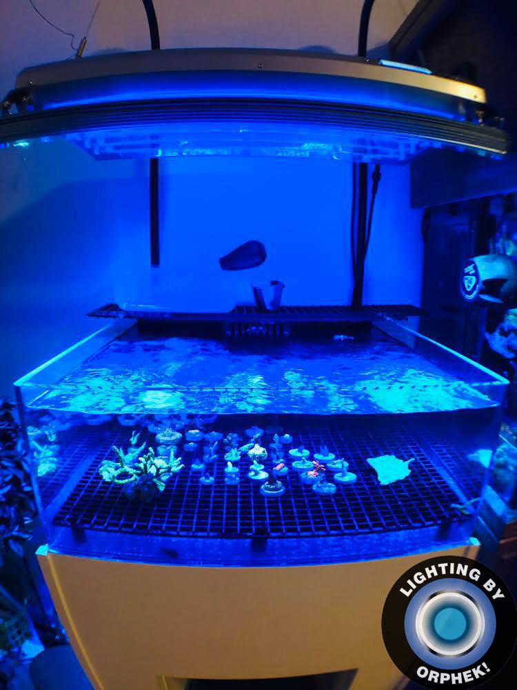 bedste koral pop LED-lys til lys revne 2020