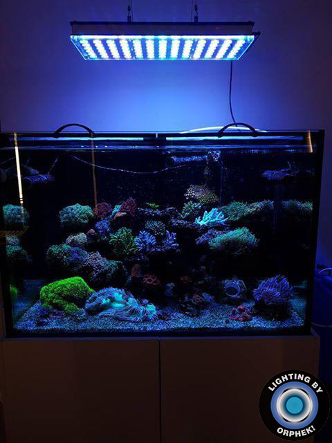 best reef aquarium LEDs by orphek 2020