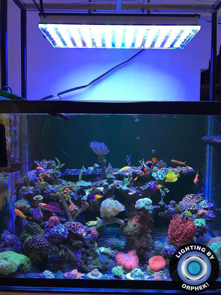 best marine saltwater reef aquarium LED lighting 2020