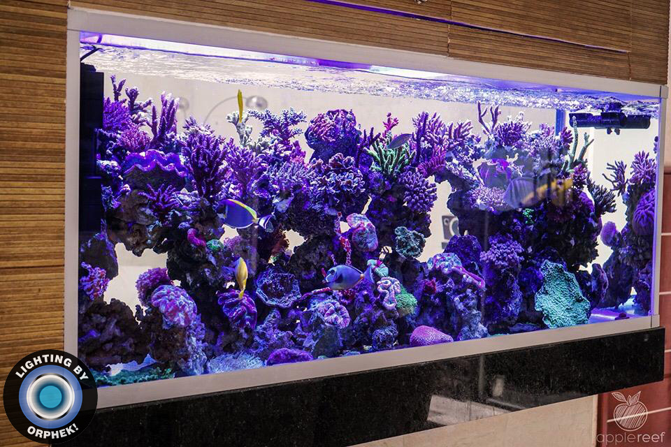 אורות LED הטובים ביותר לגידול אלמוגים