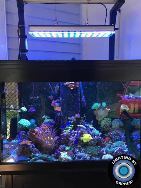 atlantik v4 reef aquarium lighting