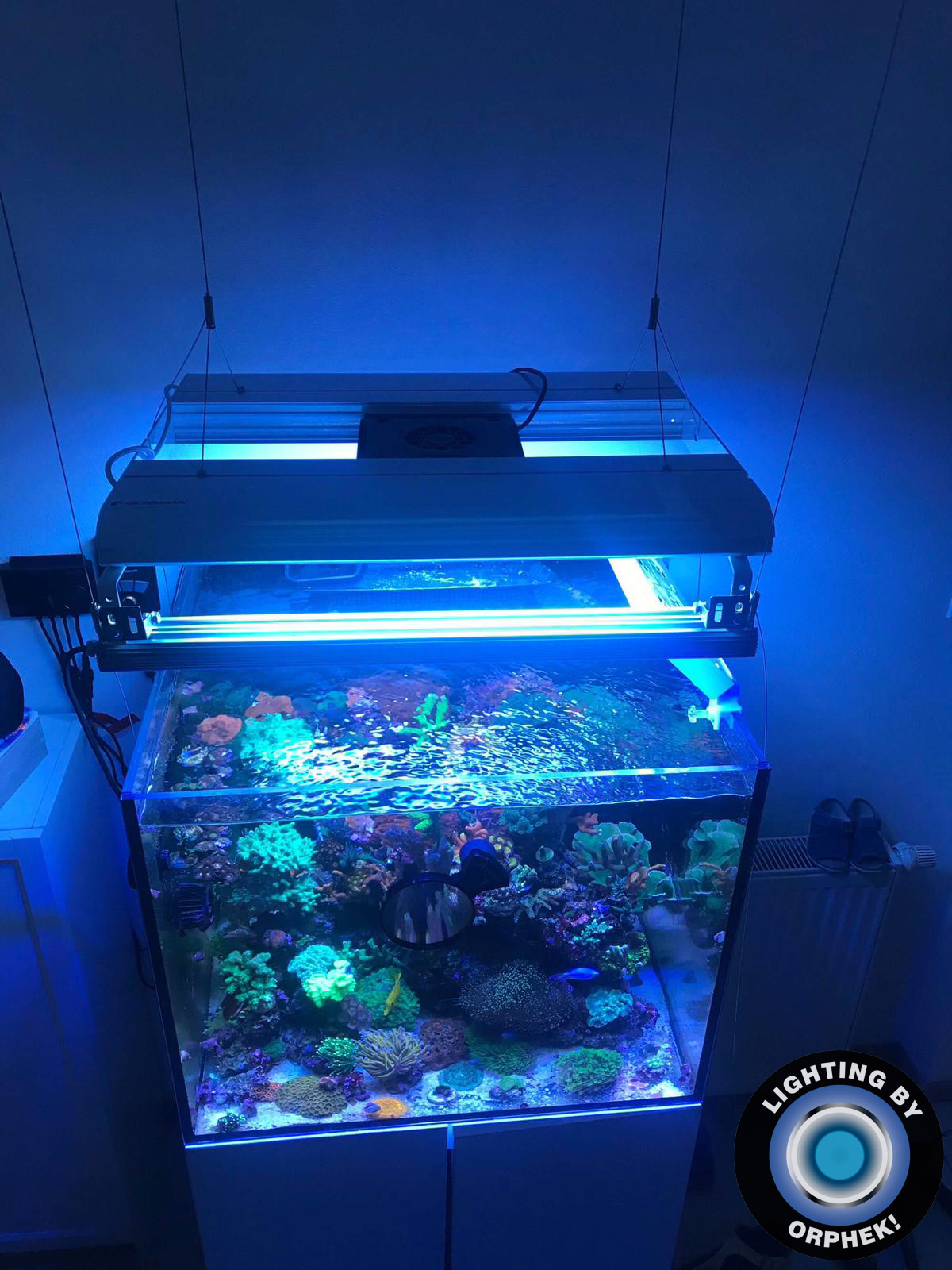 2020 лучший светодиодный светильник для рифа