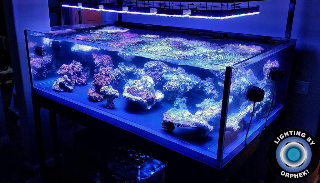 strong deep water reef tank LED lighting