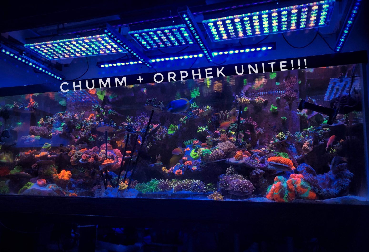 orphek the best reef LED lights 2020