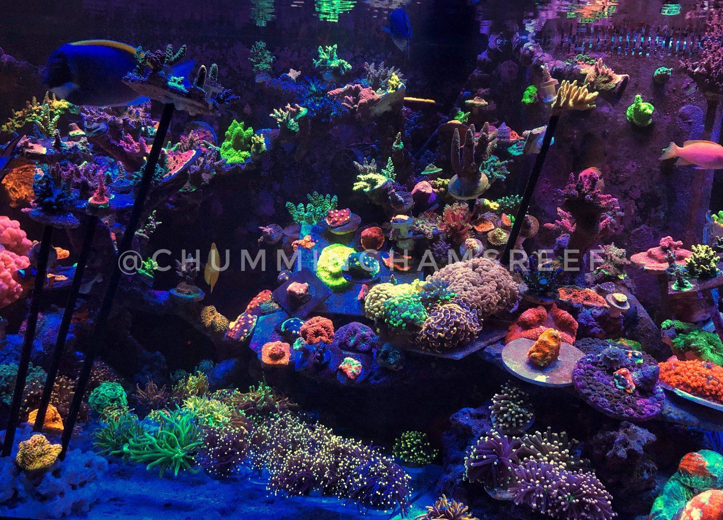 En iyi resif LED ışık akvaryum 2020