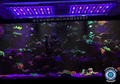 orphek LED lighting wonderful reef tank