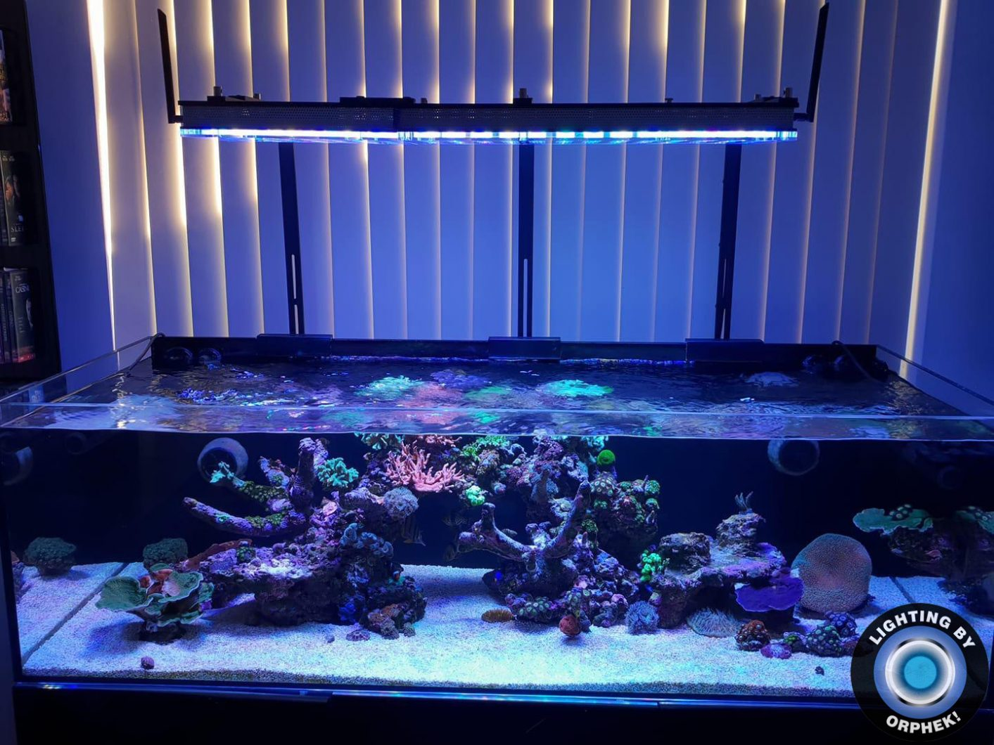 best coral growing LED lighting 2020