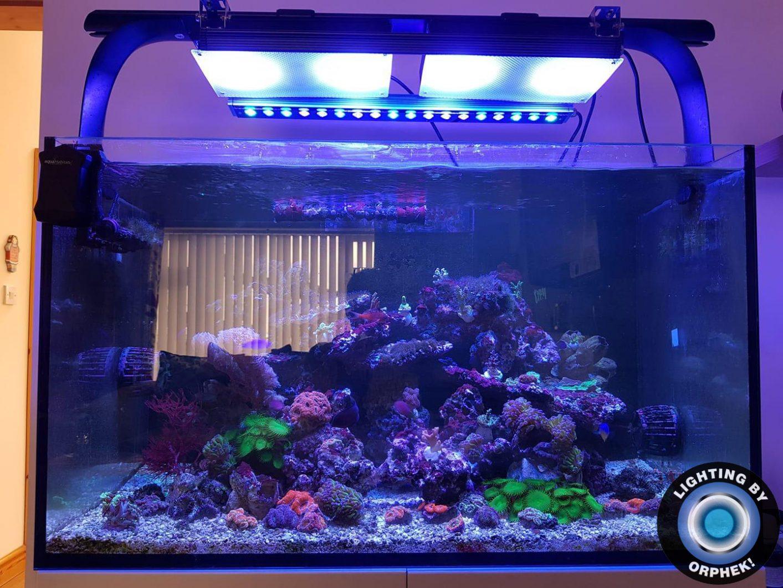 piękne akwarium rafowe oświetlone diodami LED orphek