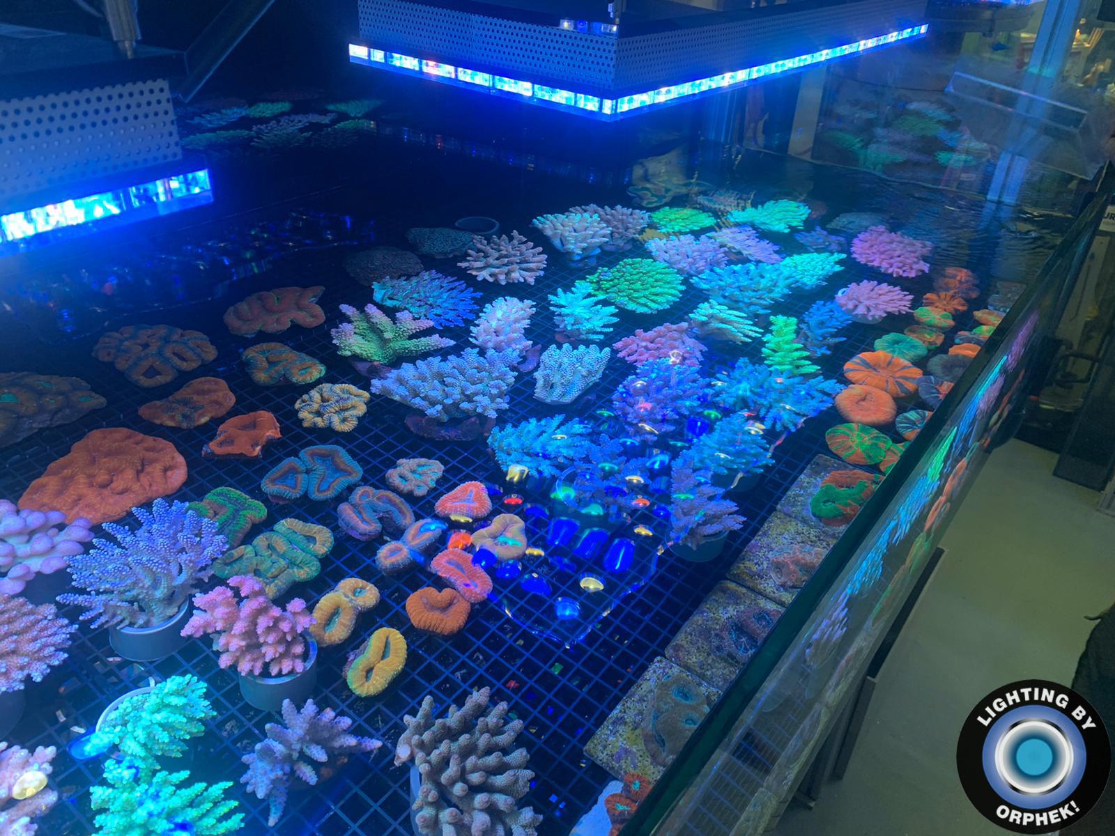 mais rápido SPS / LPS coral pop levou iluminação 2020