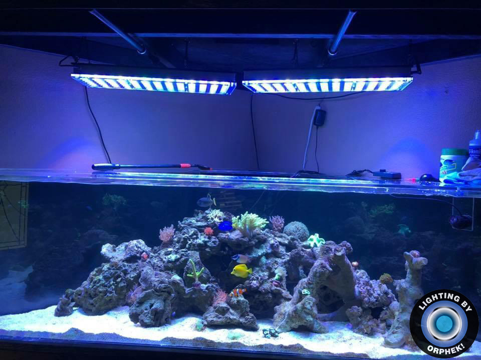 saltwater reef aquarium lighted with atlantik v4