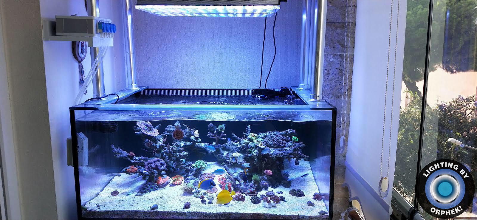 atlantik v4 beste soutwatertenk LED-lig 2020