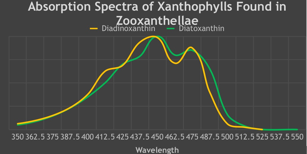 Penyerapan-Spectra-of-Xanthophylls-Found-in-Zooxanthellae