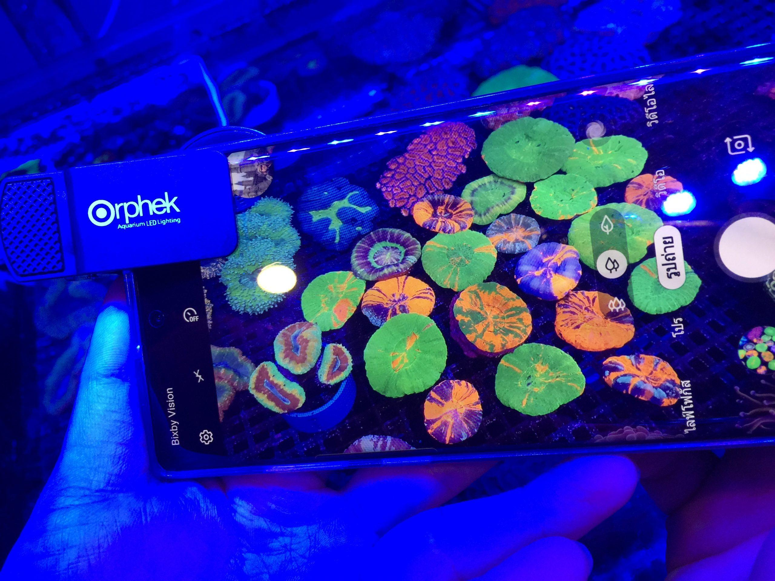 miglior smartphone con lenti per coralli 2020