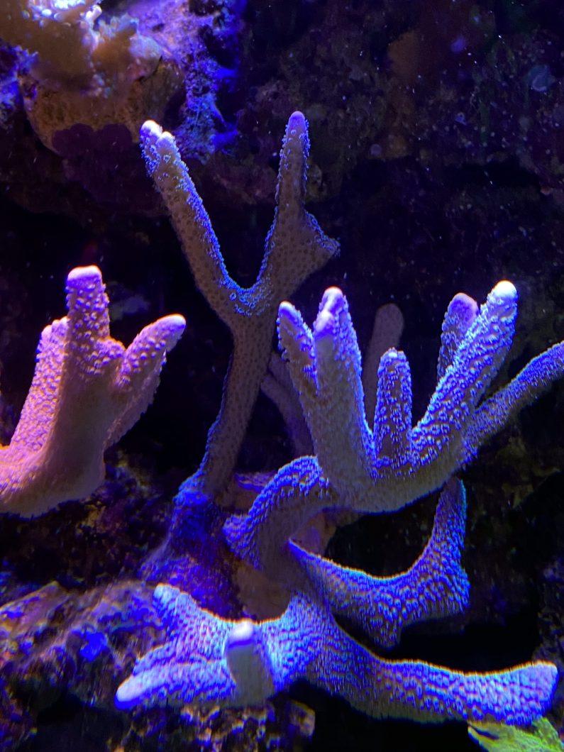 san hô rạn san hô