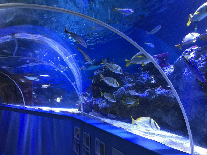 tunal-reef-aquarium