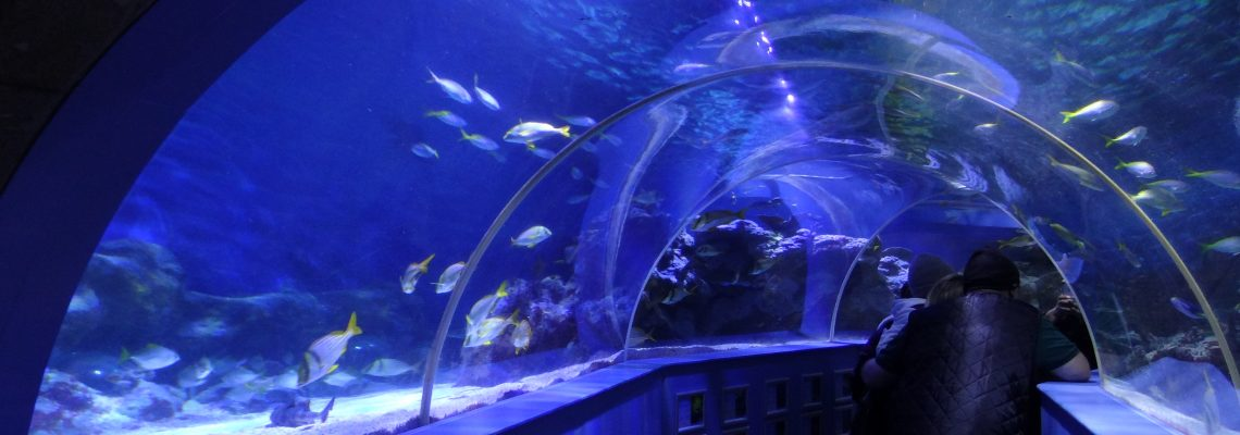 tunel-light-public-aquarium
