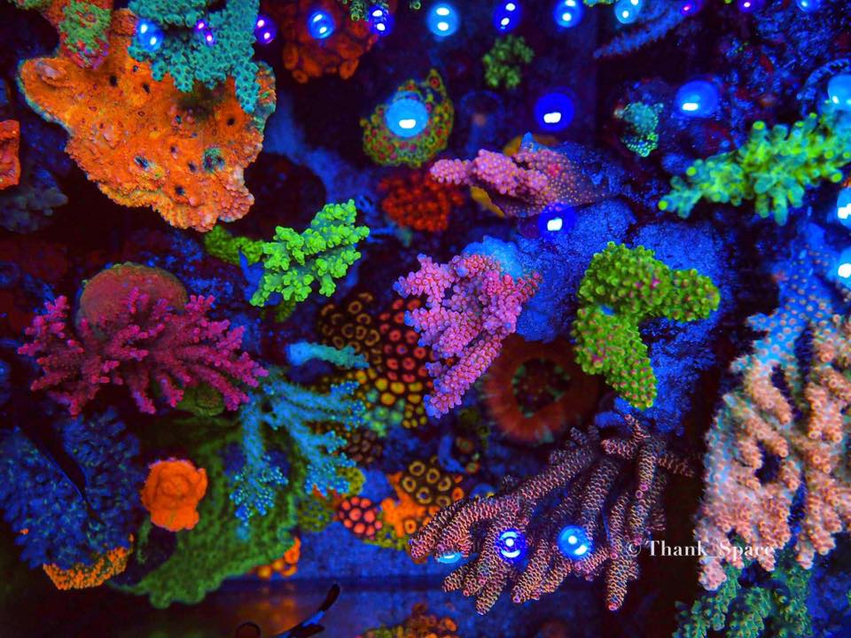 Best-reef-aquarium-pop-up-coral-color-LED-lights