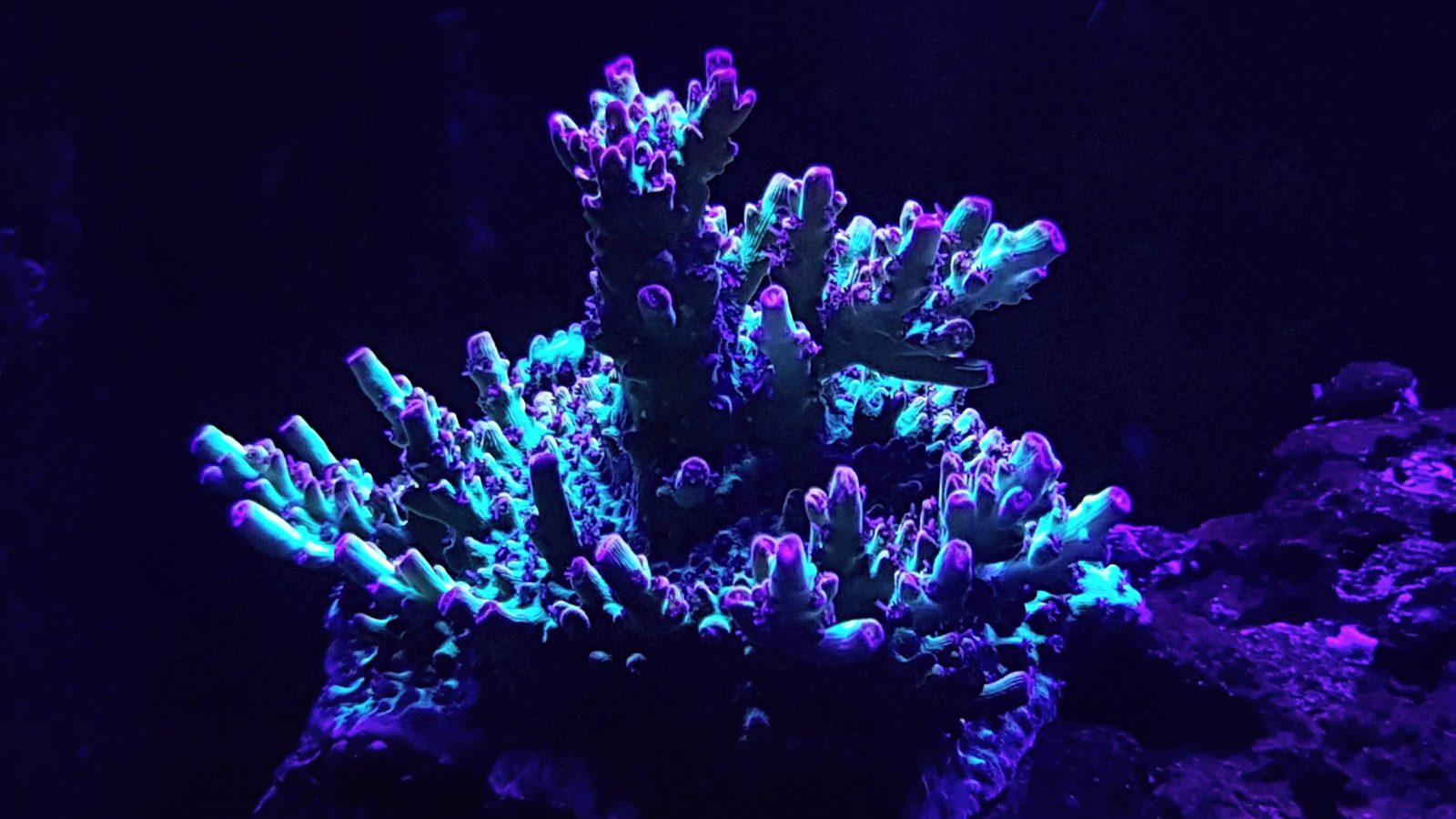melhores luzes de corais de aquário de recife