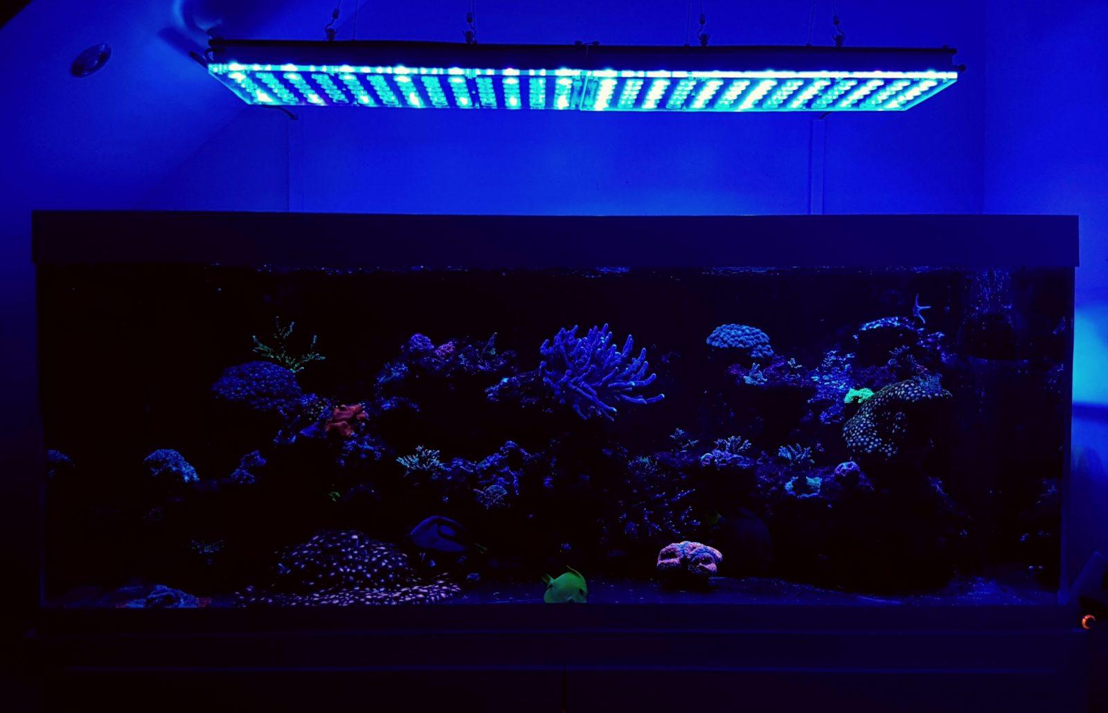 atlantik v4 melhor luz do tanque de recife