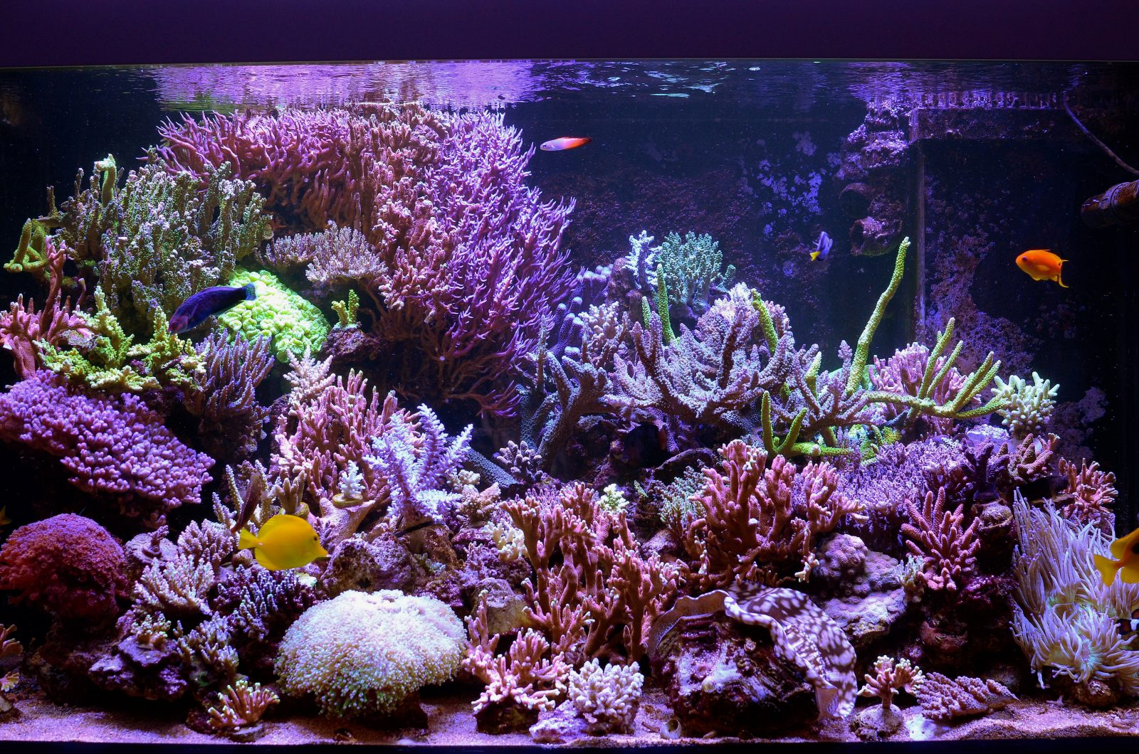 best reef aquarium leds