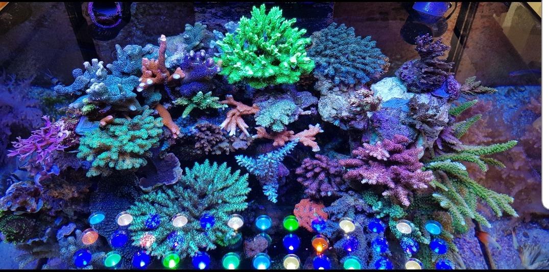 תאורת LED מיטבית אלמוגים מדהימה