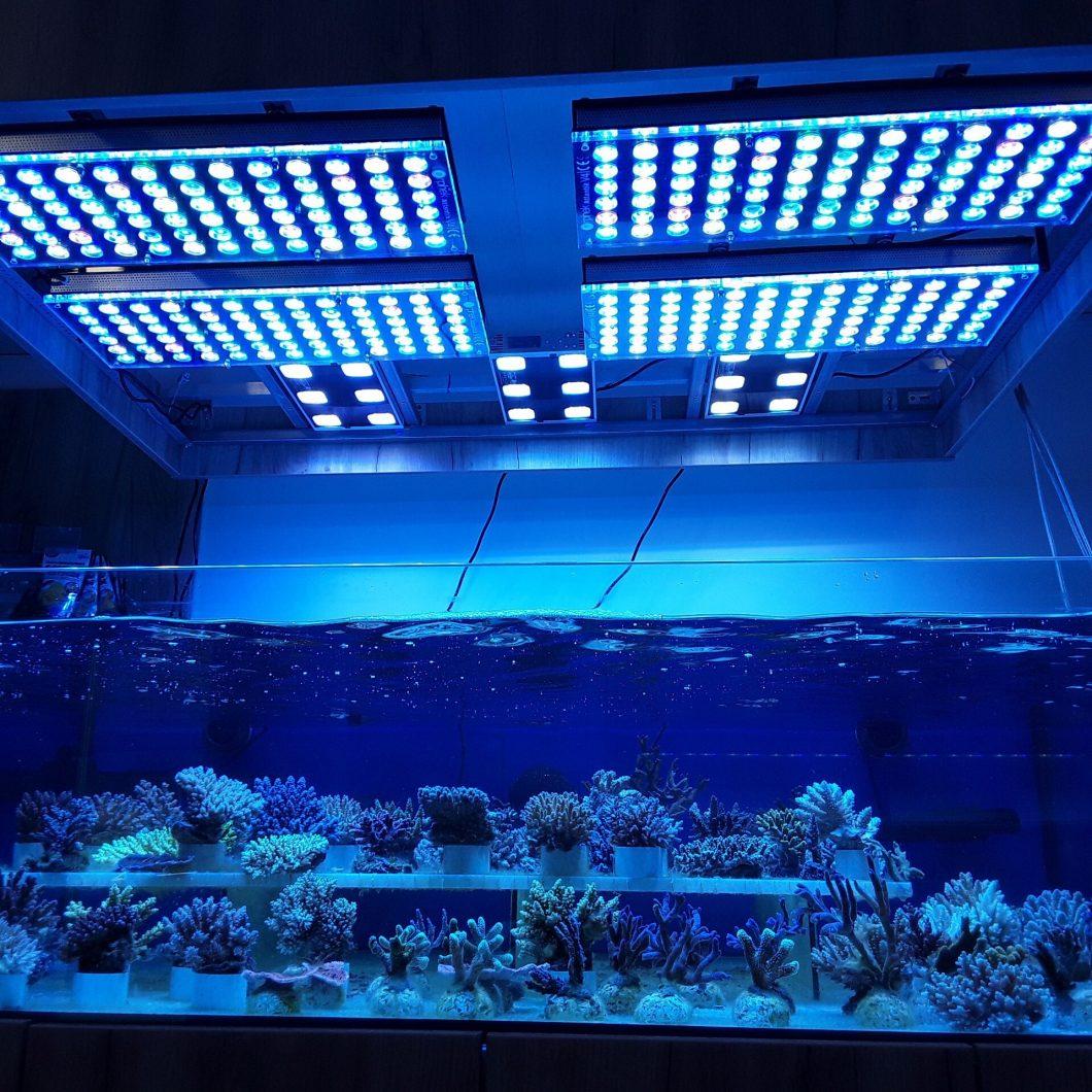 atlantik v4 بہترین نمکین پانی کے ریف ٹینک لائٹ