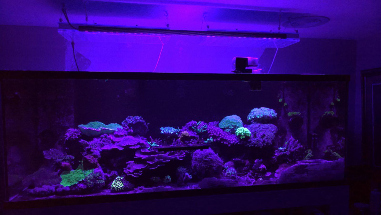 מיכל מים מלוחים פופ אלמוגים הטוב ביותר תאורת LED 2020