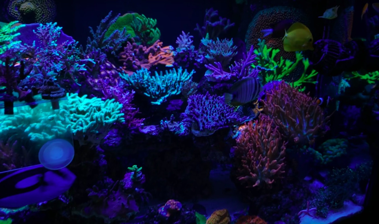 top coral growing LED lighting 2020