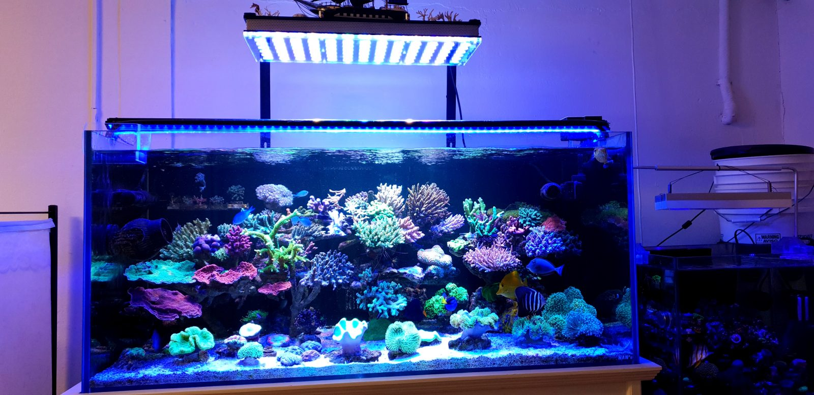 lampu akuarium atlantik v4 paling apik