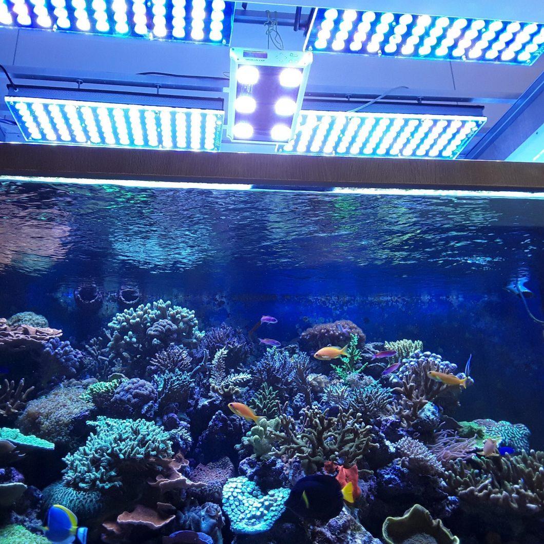 مرجان ریف ٹینک کے لئے بہترین روشنی