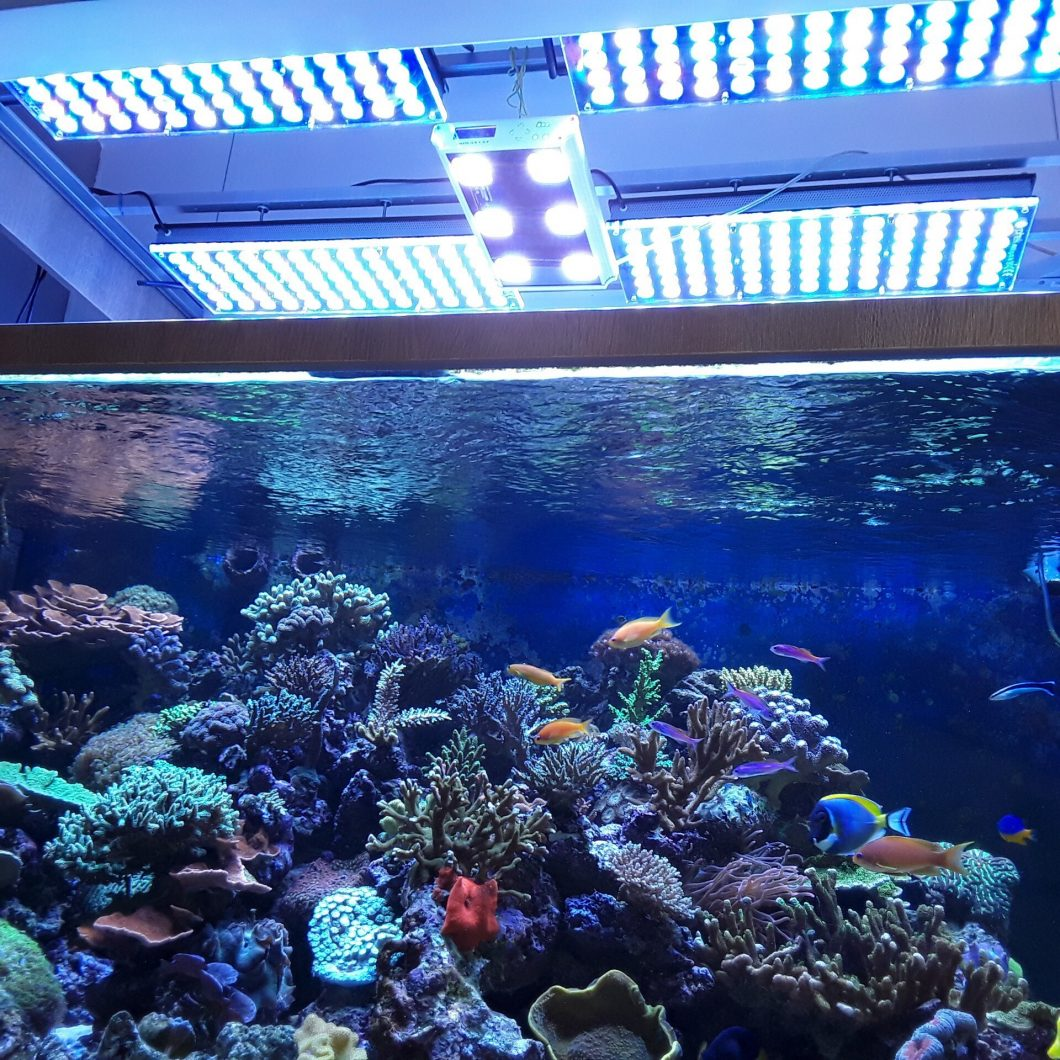 coral aquarium led lighting