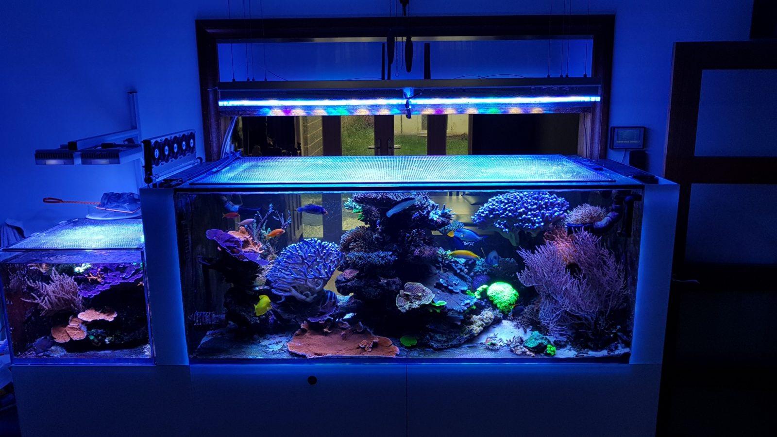 la migliore barra LED per acquari 2020
