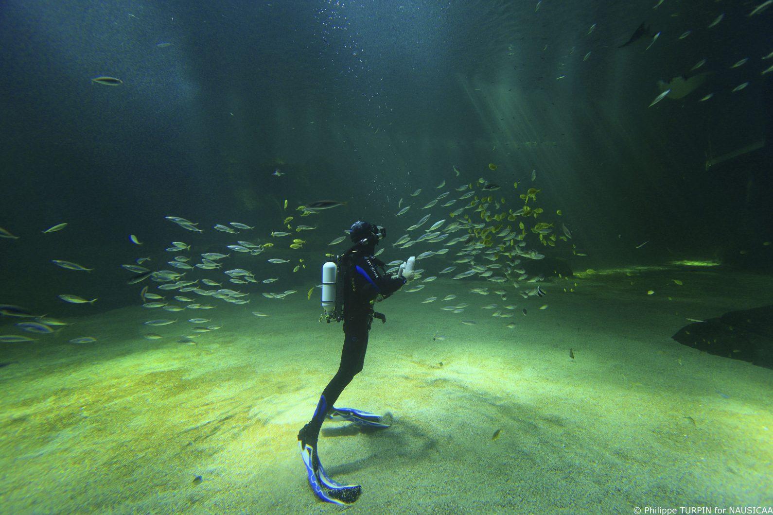 найсильніший рифовий бак LED освітлення 2020 року