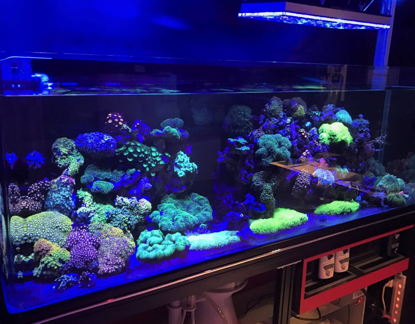 beautiful reef tank corals lighting