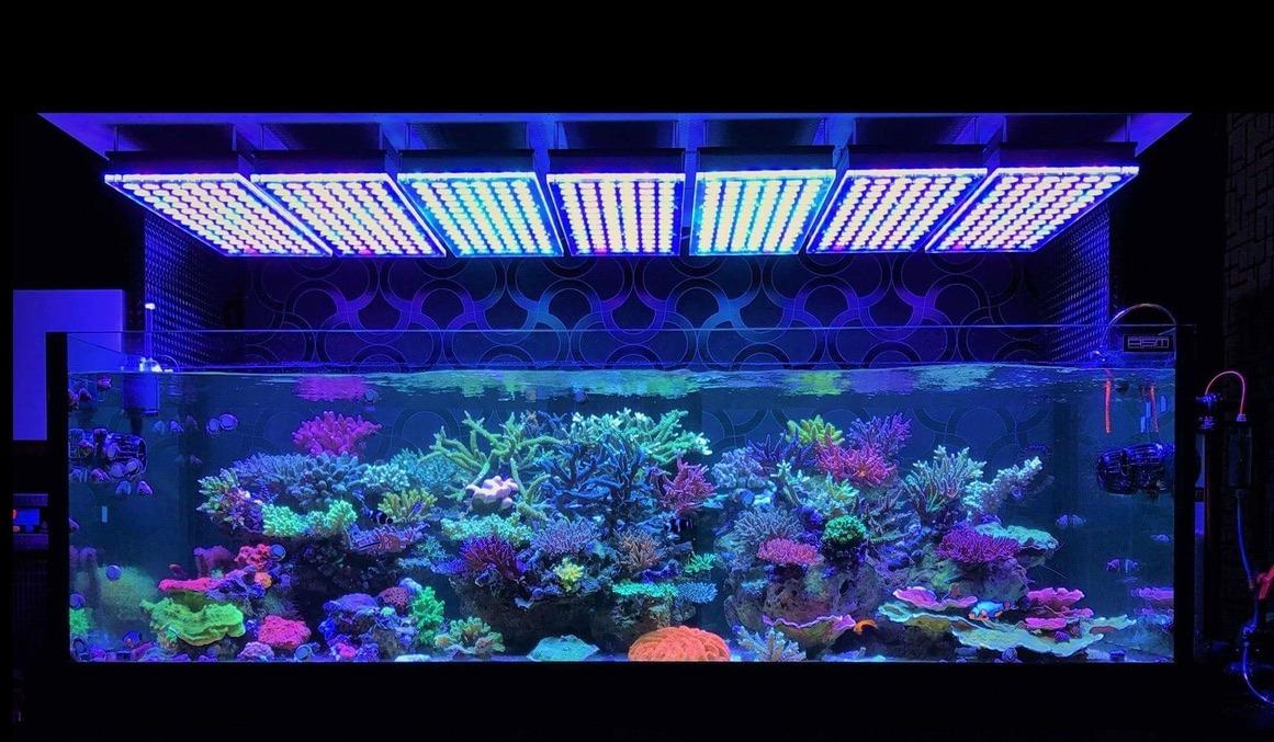 lampu LED akuarium teratas oleh anak yatim