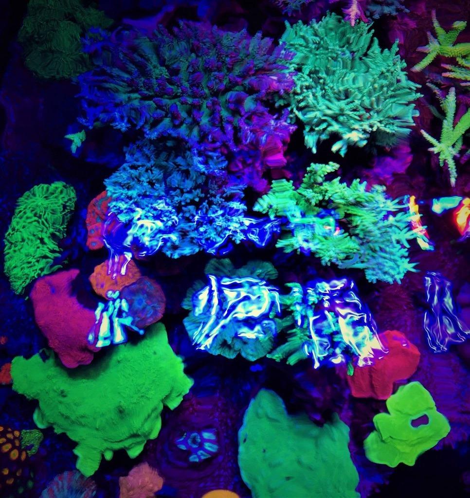 pencahayaan tangki terbaik untuk pop karang