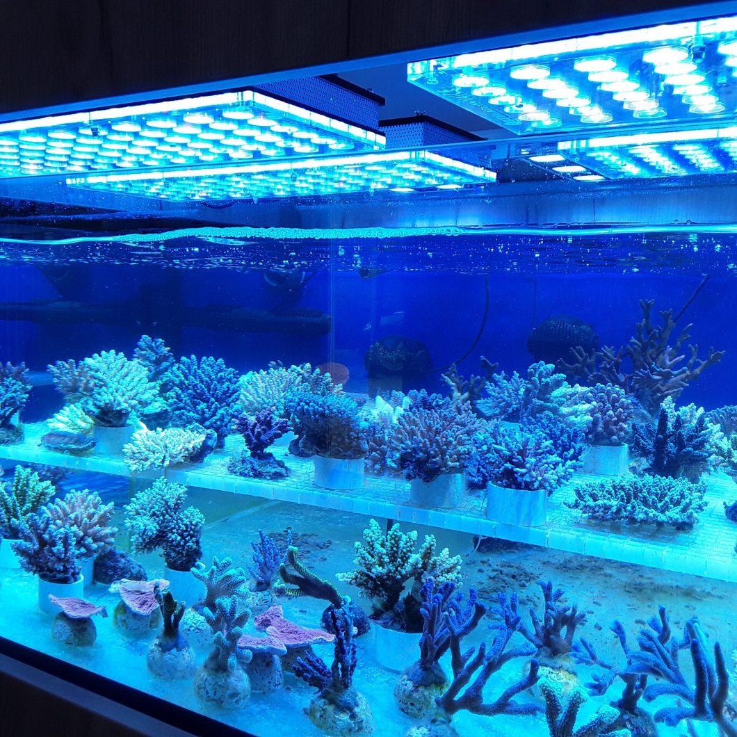 2020 بہترین مرجان ٹینک کی قیادت میں روشنی ، نظم روشنی