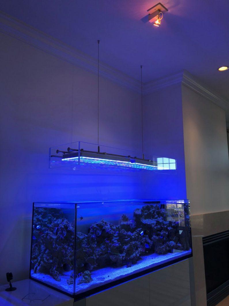 lampu tangki terumbu terbaik atlantik v4