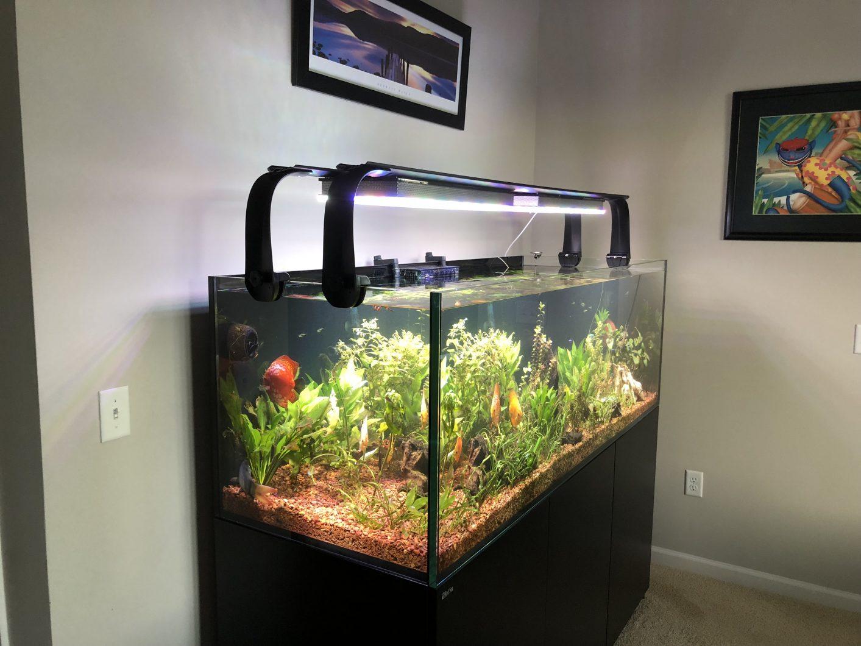 pencahayaan akuarium air tawar terbaik 2020