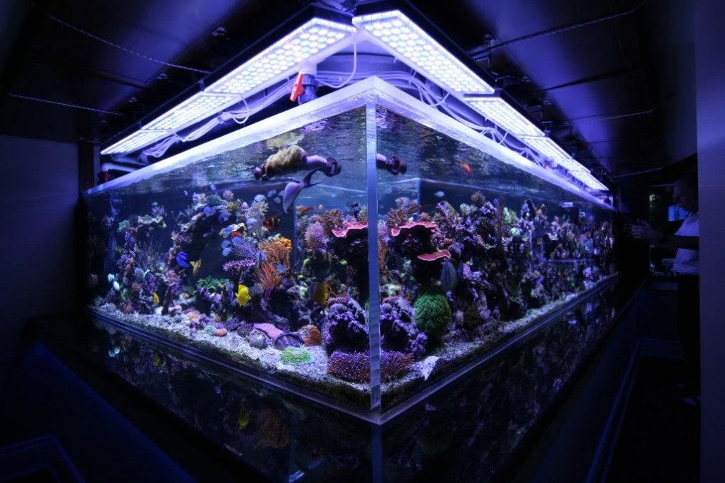 सबसे अच्छा गहरे पानी की चट्टान टैंक एल ई डी
