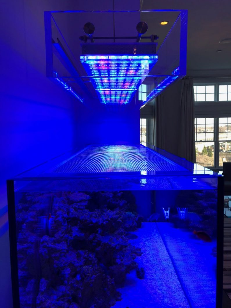 pencahayaan akuarium terbaik