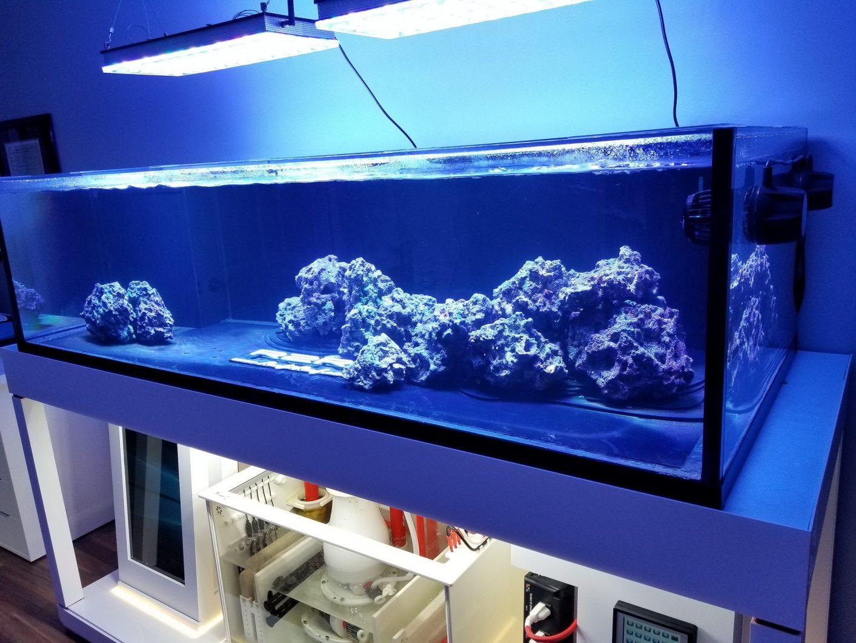 खारे पानी की चट्टान मछलीघर रोशनी