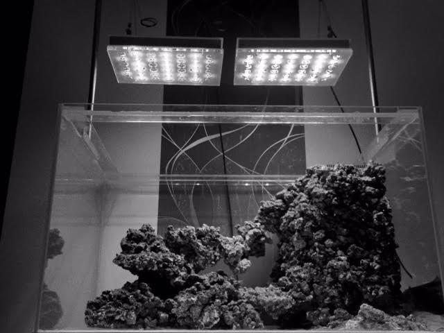 اتلانتيك v4 مضغوط أفضل ضوء خزان المياه المالحة