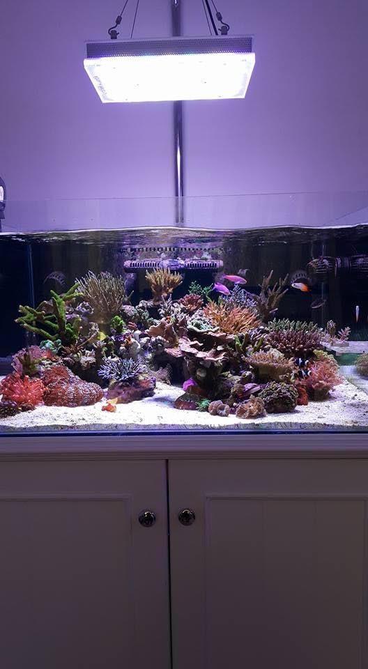 أدى أفضل أضواء خزان المرجانية orphek