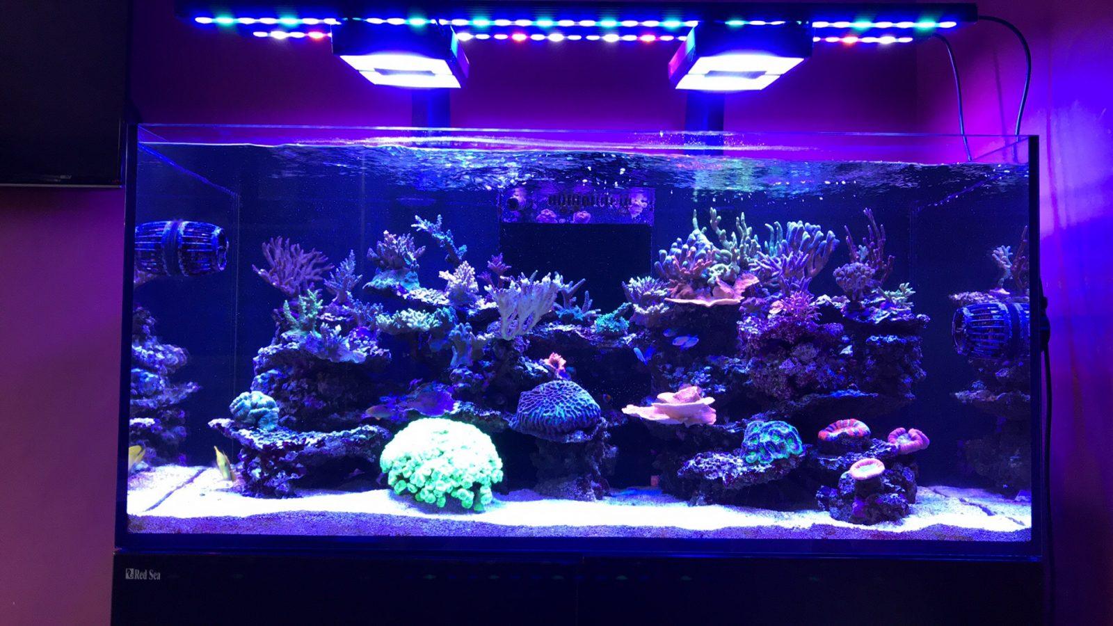 أفضل الحوض الشعاب LED قطاع