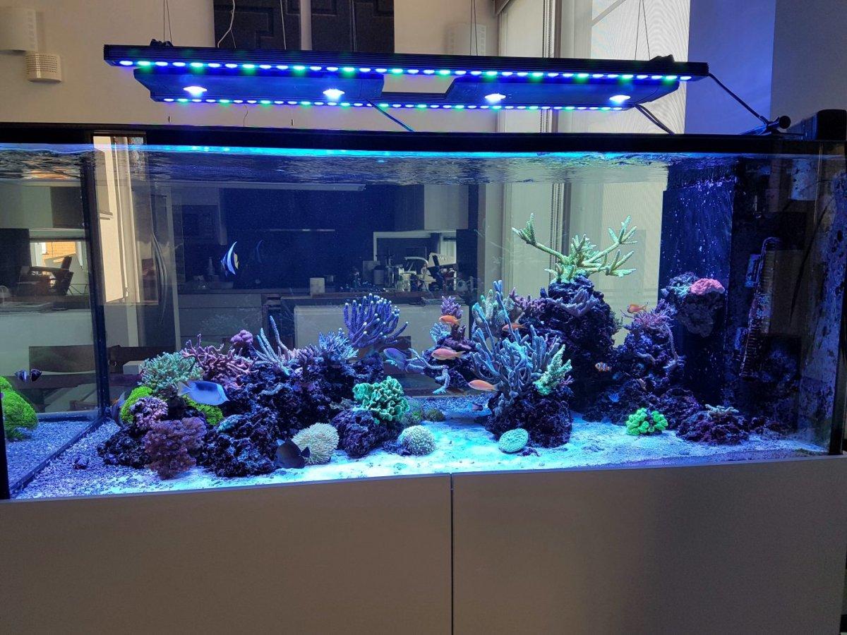 תאורת LED orphek לאקווריום השונית