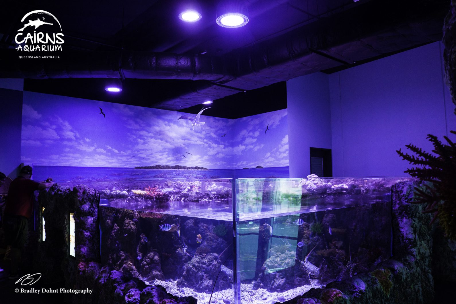 best lighting for public saltwater aquarium